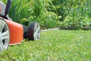 Acsed Service Jardinage